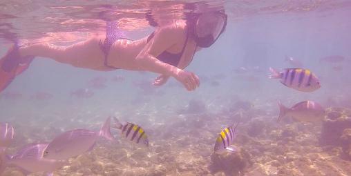 Salt Pond Fishes
