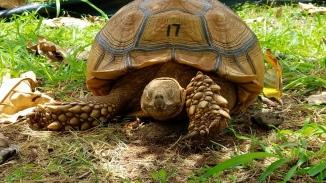 Tortoise Farm Kauai